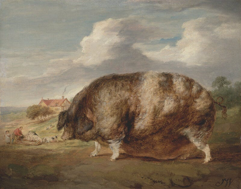 Is that a small village or just a really big pig?