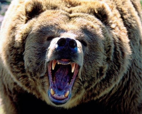 Angry Bear.jpg
