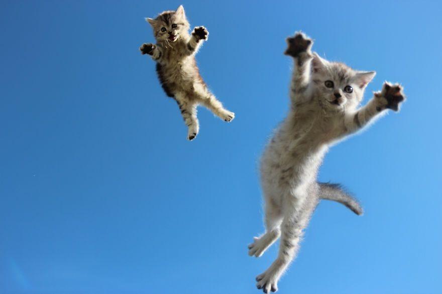 30 Cats Jumping ideas | cats, jumping cat, funny cats