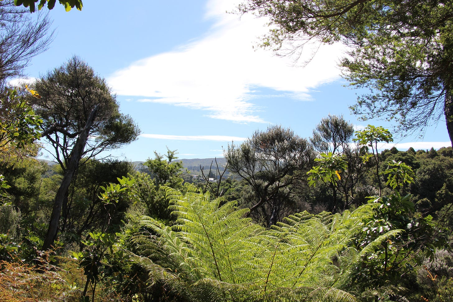 view from the top of a hill with blue skies, ferns in the forground and hills further away