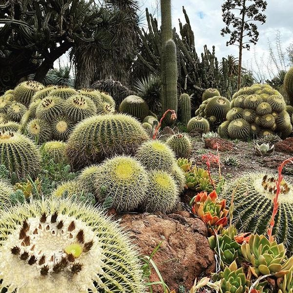 We'll get through this — persevere like the cactus. (Huntington Gardens)