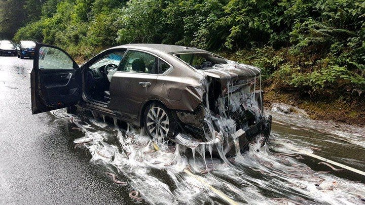 A car is covered in hagfish, and slime, after an accident on Highway 101.