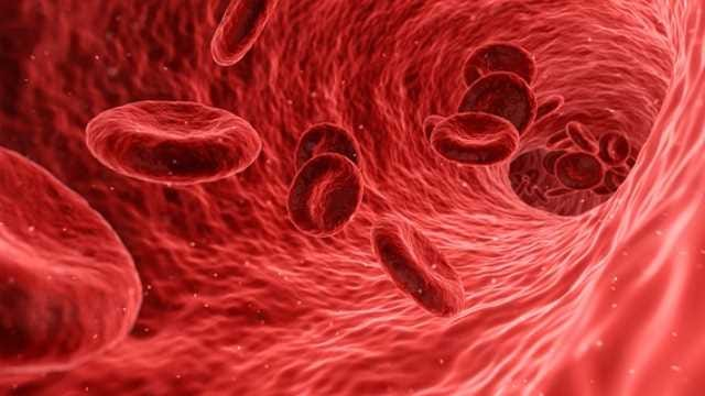 Image result for blood cell