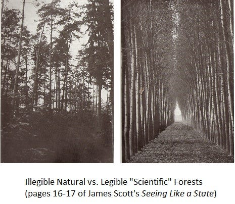 Image result for scientific forest