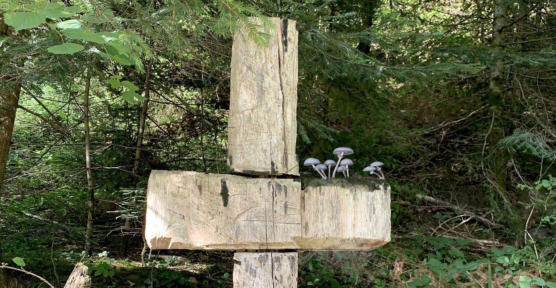 mushrooms on a cross