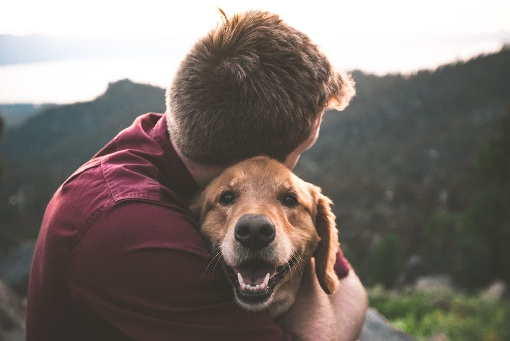 100+ Pets Pictures   Download Free Images on Unsplash