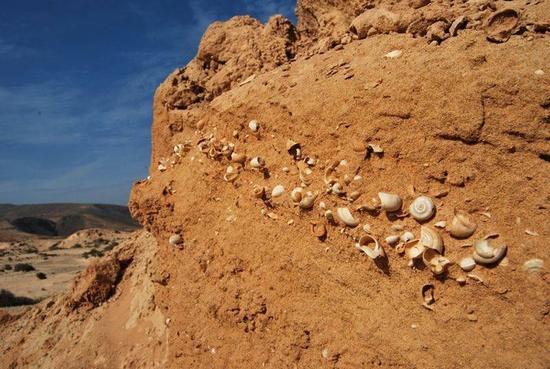 Foto de caracoles fosilizados