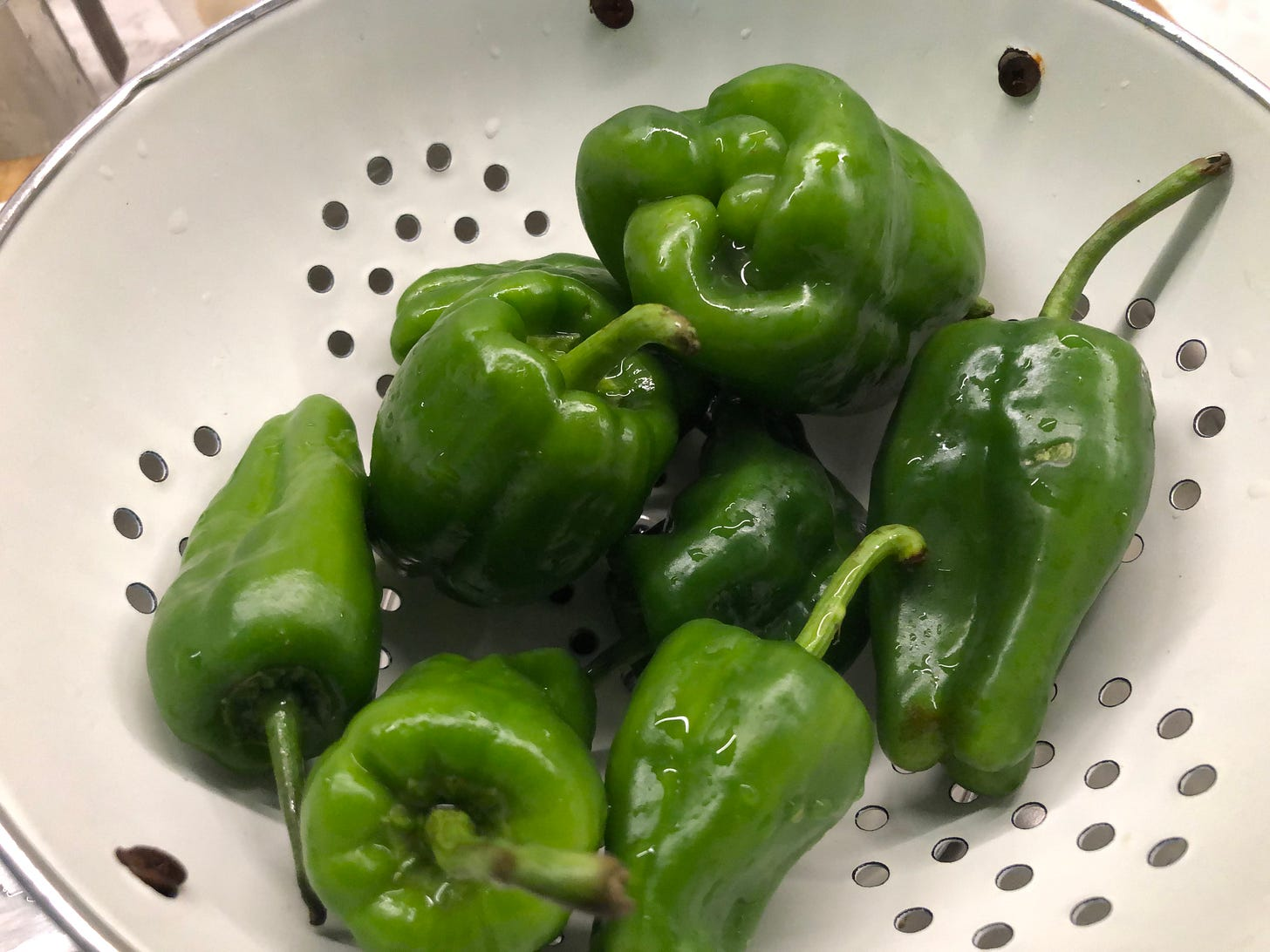 A colander full of just-washed, very large Padron peppers