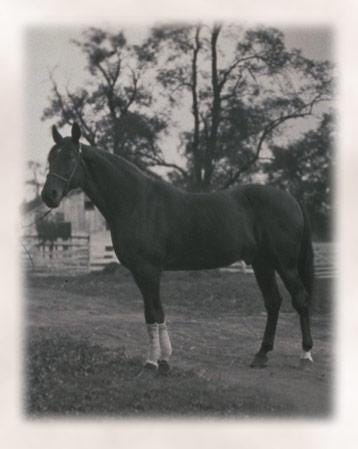 Image result for peter the great racehorse