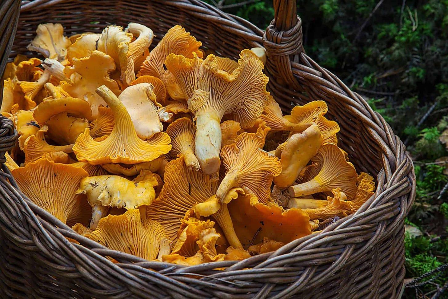 uma cesta de vime com cogumelos alaranjados bem massudos