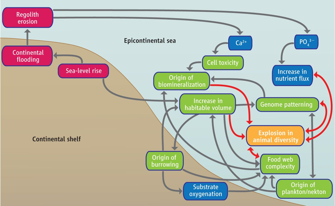 Causes of the Cambrian Explosion   Science
