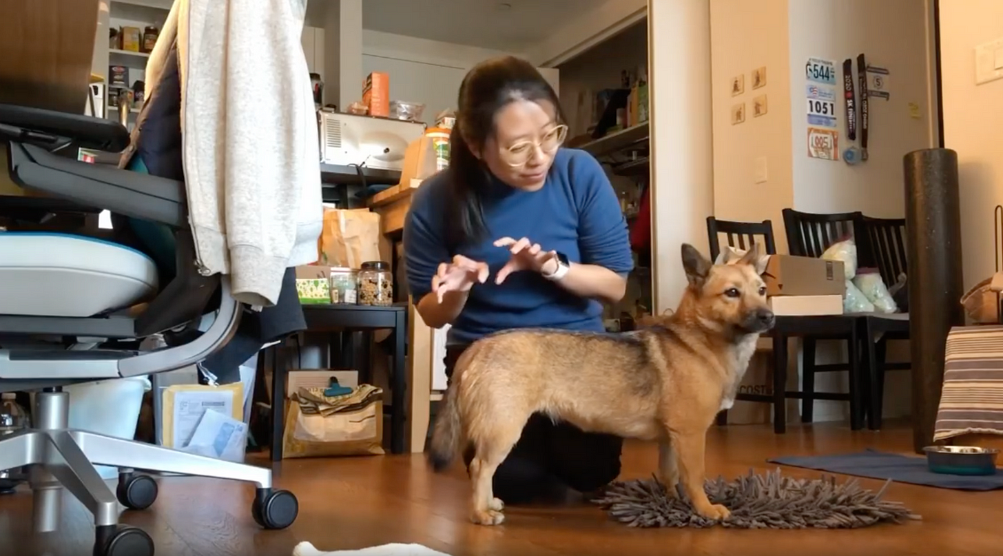 Woman in a blue sweater with her hands in claw shape, playing with a small dog that seems to be ignoring her.