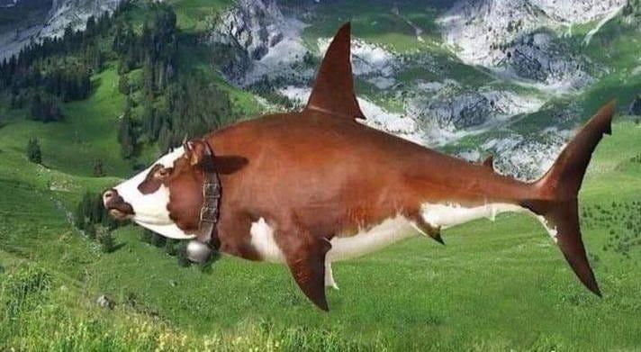 Créature hybride requin-vache