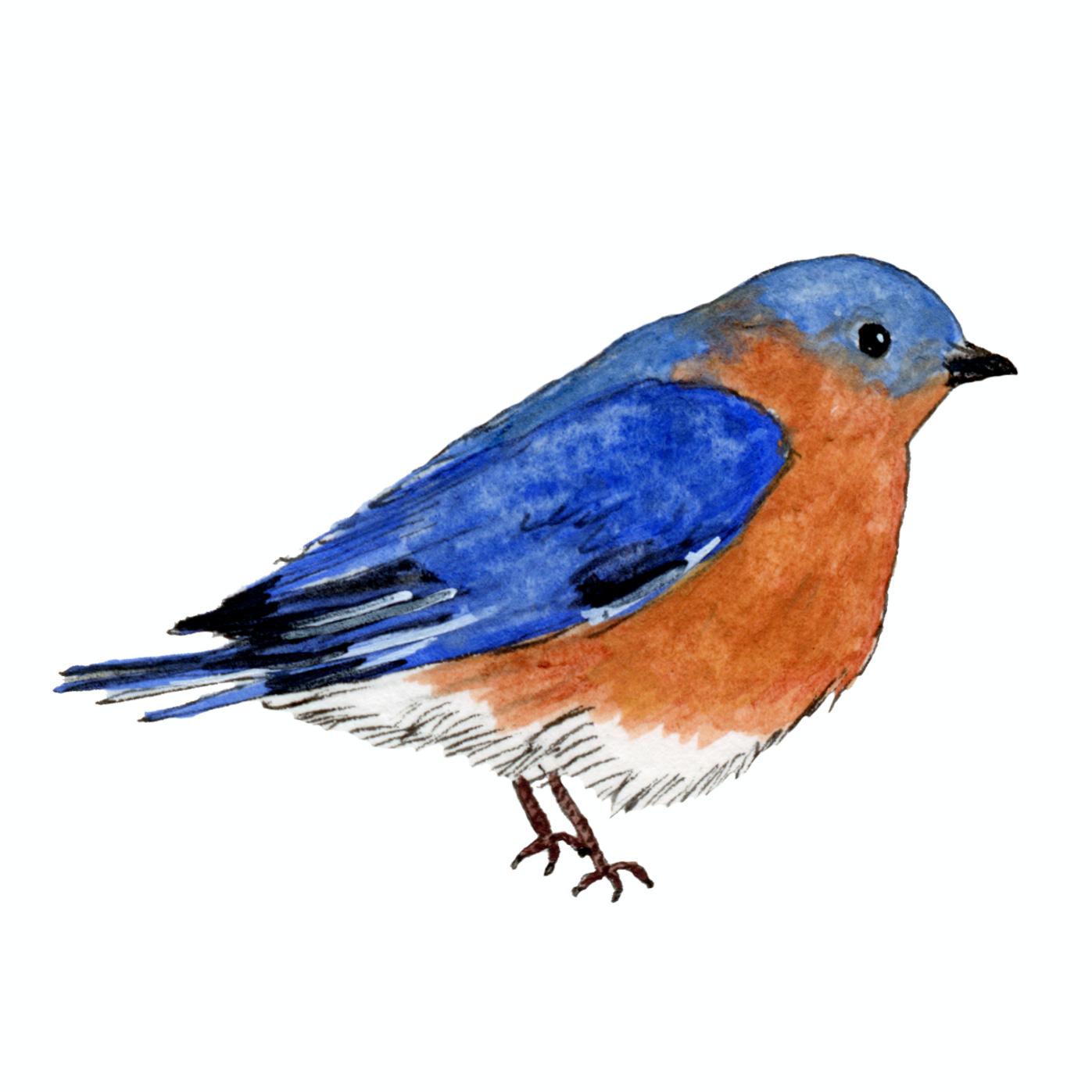 Jodi Ettenberg newsletter bluebird mascot