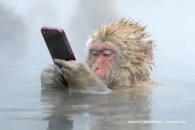 The Story Behind This Incredible Photo Of A Snow Monkey Using An iPhone -  500px