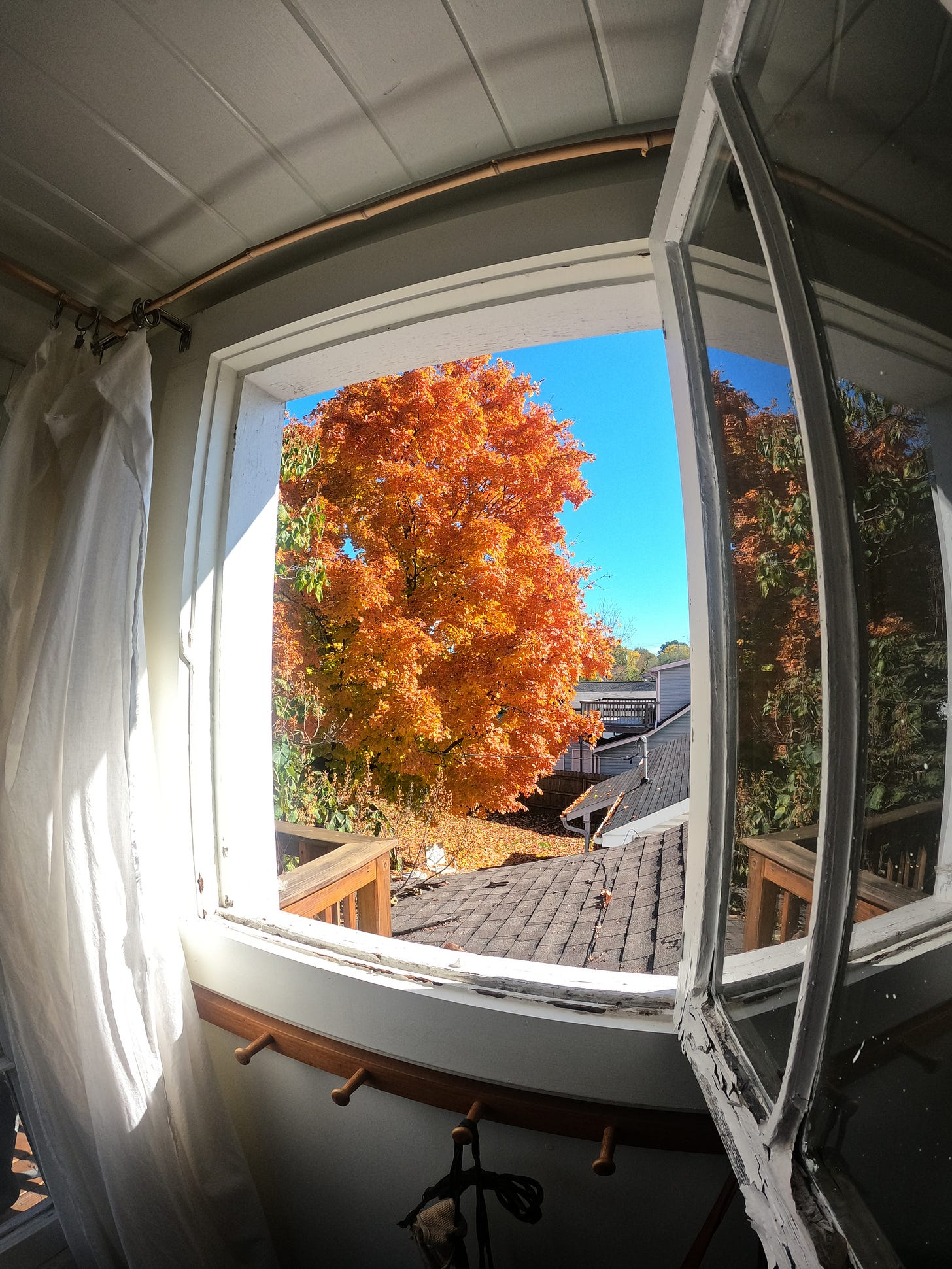 Amazing orange fall tree outside out Airbnb window