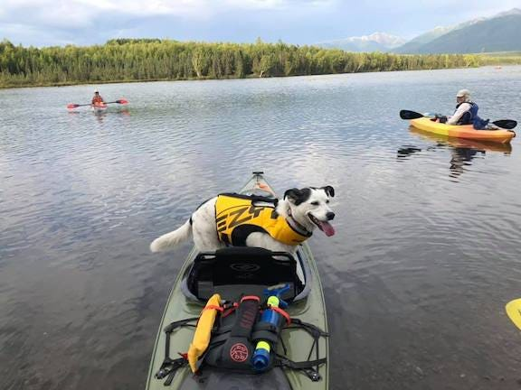 Image of a green kayak on a lake. Inside the kayak is a smiling white dog wearing a yellow life jacket.