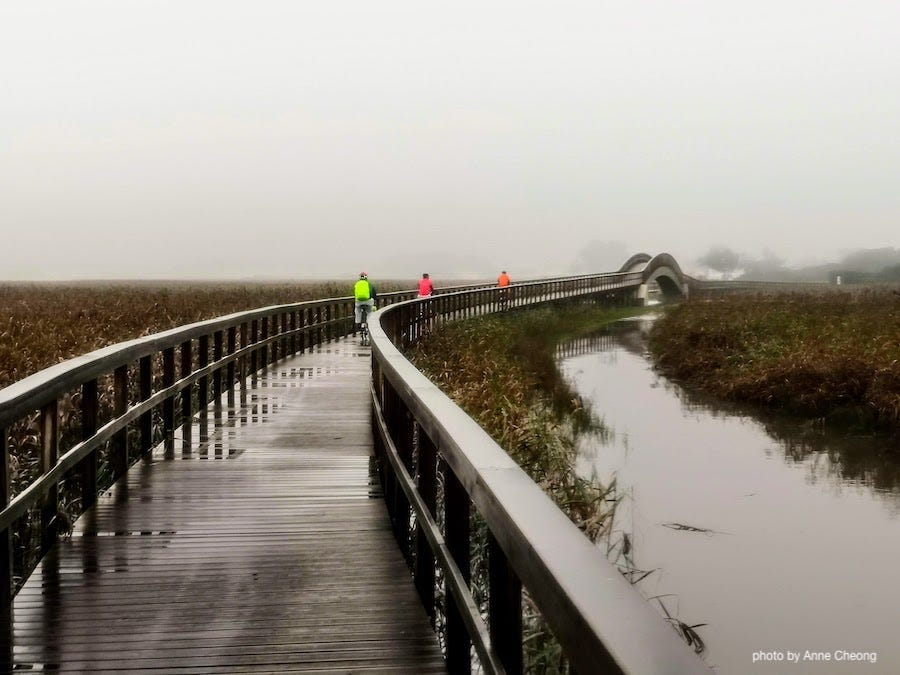 Photo of a curving boardwalk, surrounded by autumn grass, the atmosphere is misty and dreamy. Three cyclists are far away in the background, visible only by their brightly coloured rain jacket: red, orange, blue.