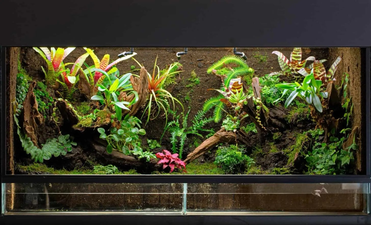 The Definitive Guide to Creating a Paludarium (Tank, Plants and Building  Suggestions) - Fishkeeping World