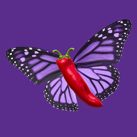 A purple background with a purple monarch butterfly with a red chili pepper for a body and two stems as antennae.