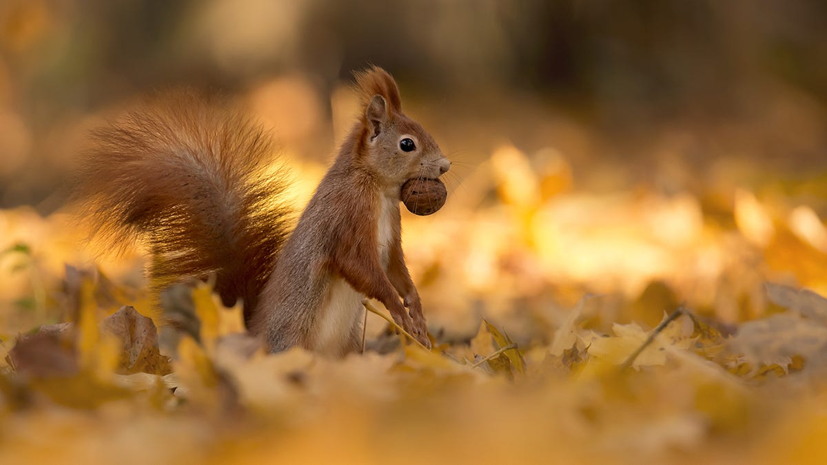 A squirrel eating a nut  Description automatically generated with low confidence