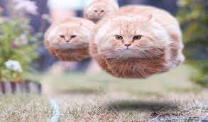 Attack of the Fat Cats: Amazon.it: Appstore per Android
