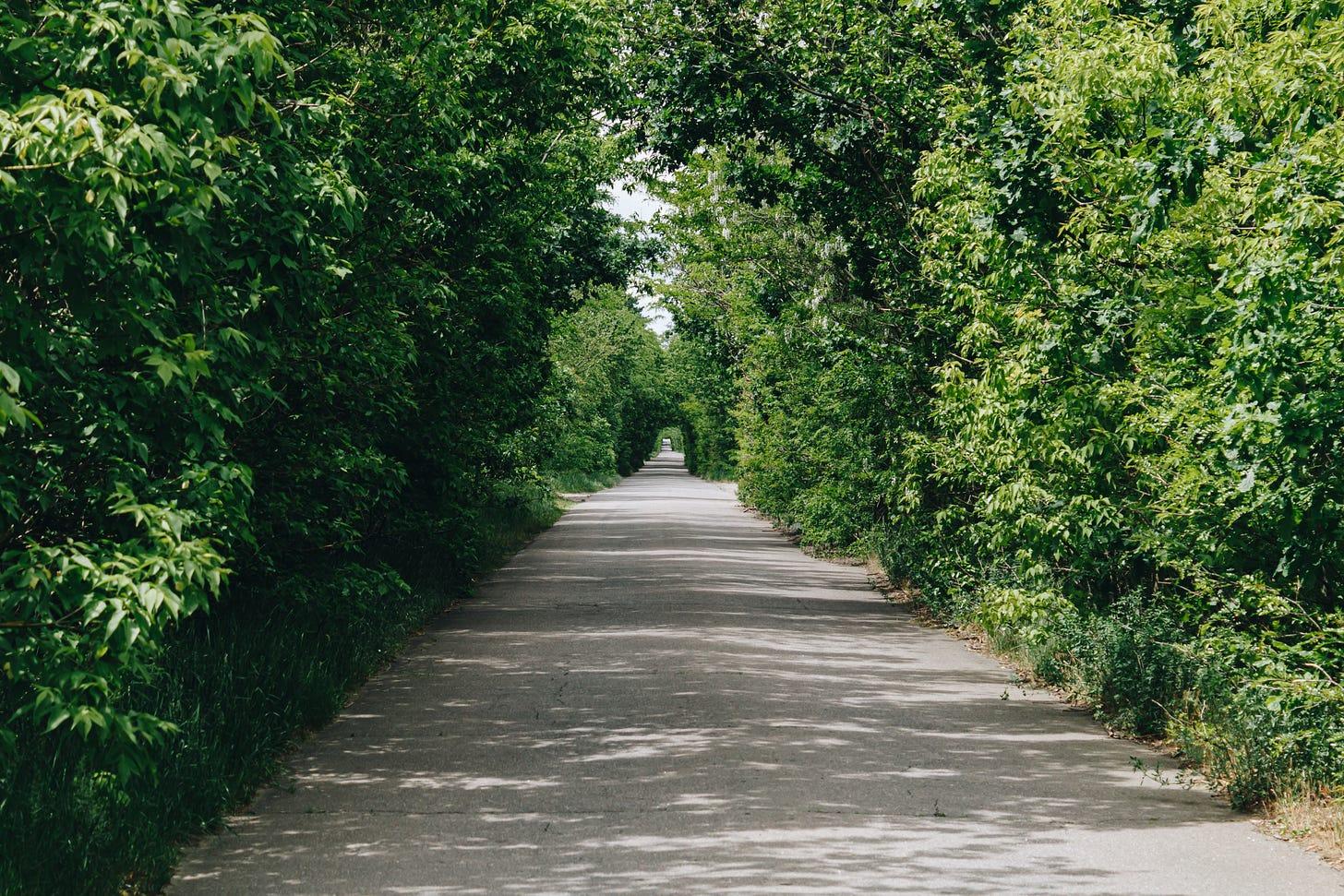Path through tress
