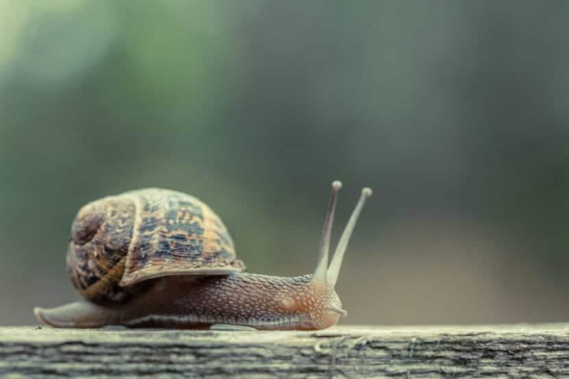 snails have lumps