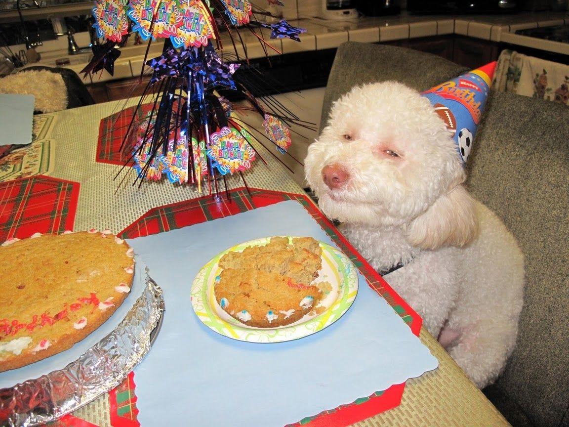 Birthday Dog | Know Your Meme