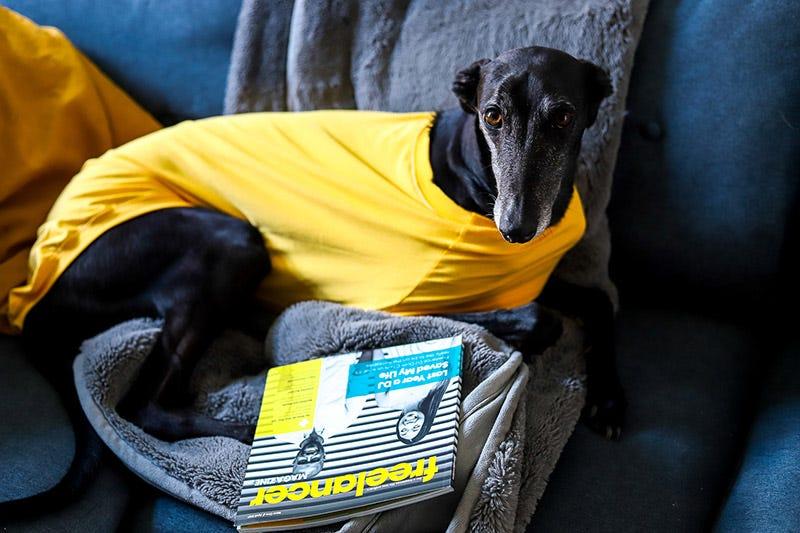 Harmony the greyhound and Freelancer Magazine