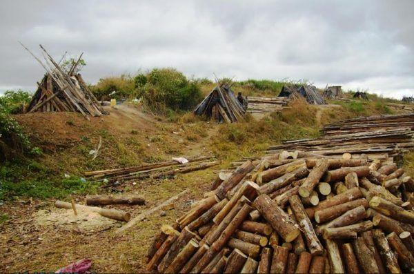 """MK1.7 billion """"deforested"""" at the Viphya Plantation as project struggles to survive"""