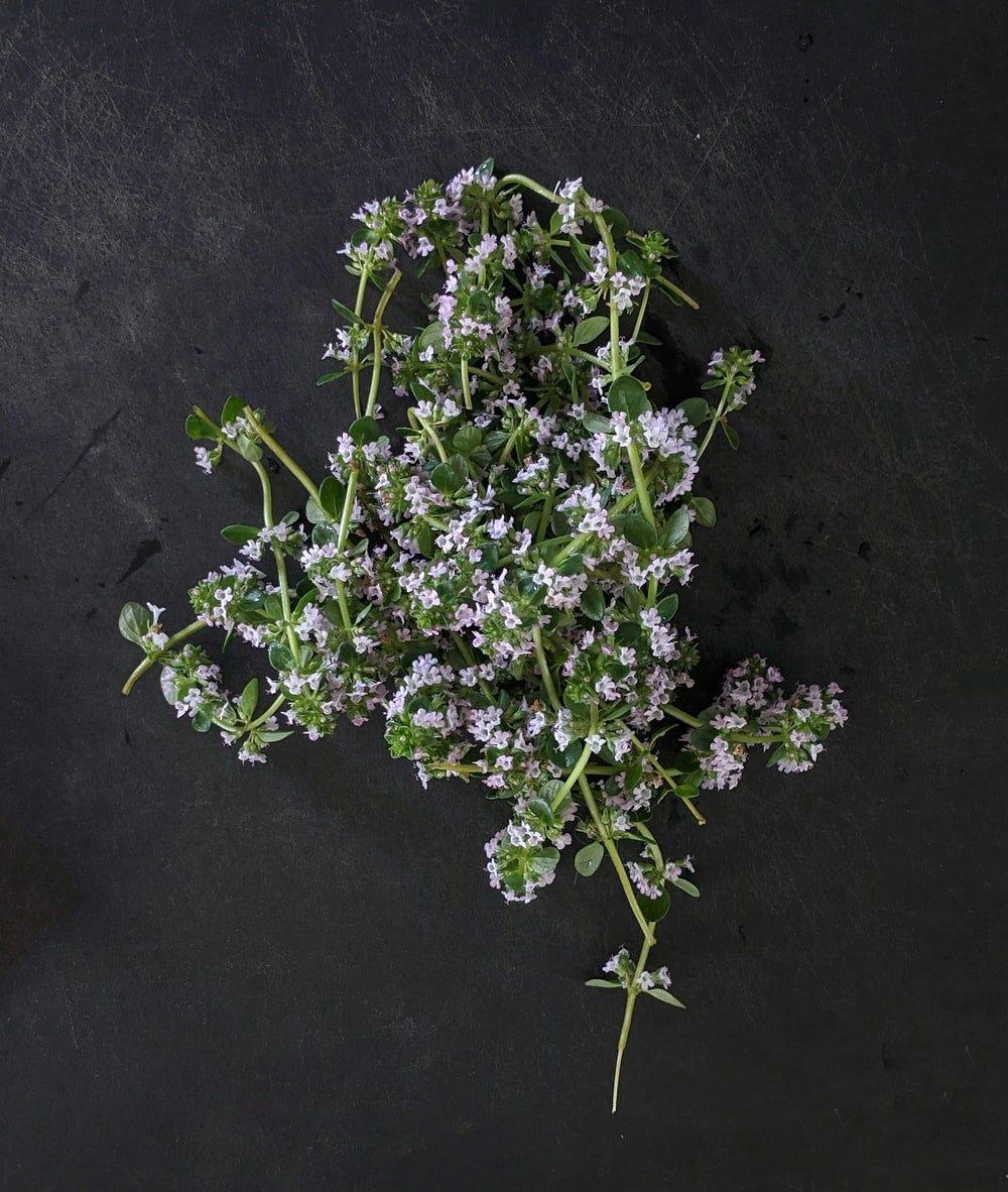 purple flower on black textile