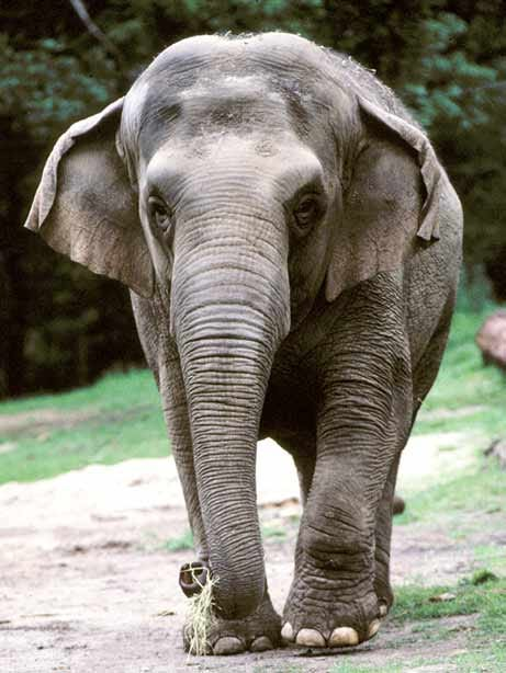 060302_elephants_big