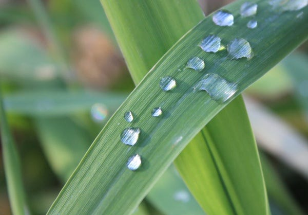 Grass with morning dew Free stock photos in jpg format for free download  510.72KB