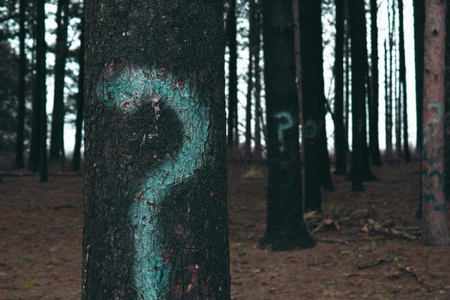 questions marks spray painted on trees