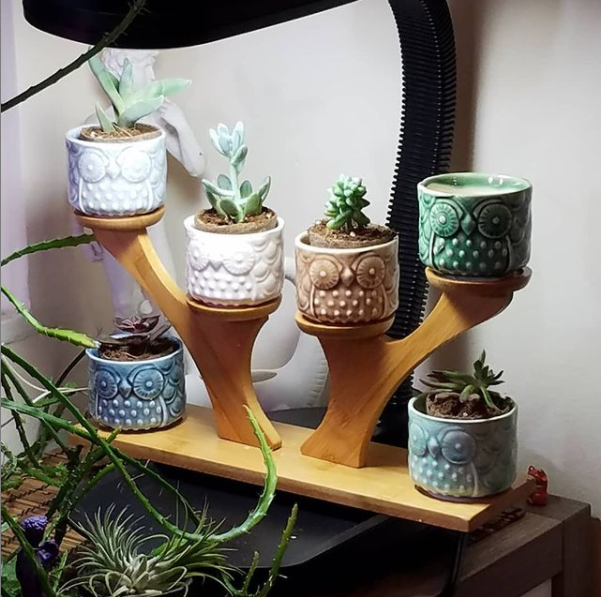 Multi-armed bamboo plant stand with six small planters that have an owl design with a different succulent in each, all sitting under a plant light