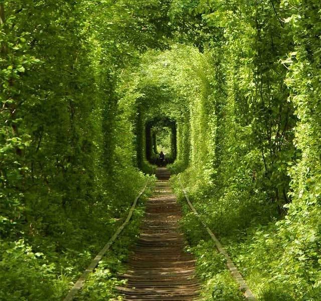 15 Astonishing Tree Tunnels You Should Visit - Touristlink Blog