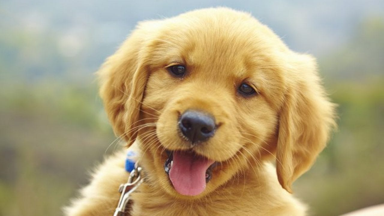 Stages Of Puppy Development - DogTime