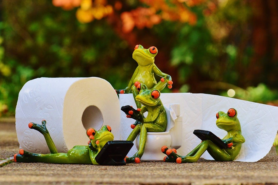 Frog, Toilet, Loo, Session, Funny, Toilet Paper, Wc