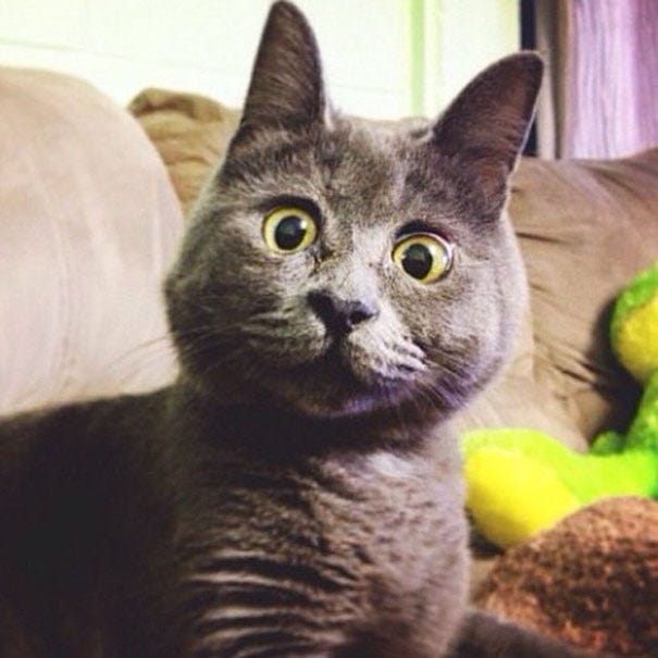 This Permanently Surprised Cat Wasn't Supposed To Survive, Now He's 4 Years  Old | Bored Panda