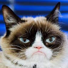 Grumpy Cat's Death Marks the End of the Joyful Internet | WIRED