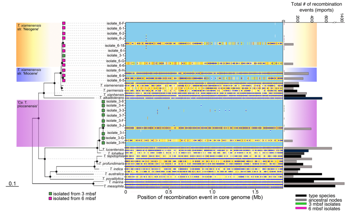 A lack of recombination in genomes from deep biosphere bacterial isolates