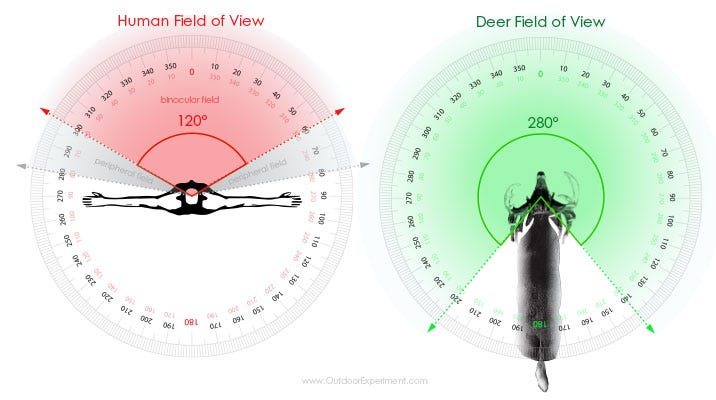 OUTDOOR EXPERIMENT: What Deer See - Whitetail vs. Hunter