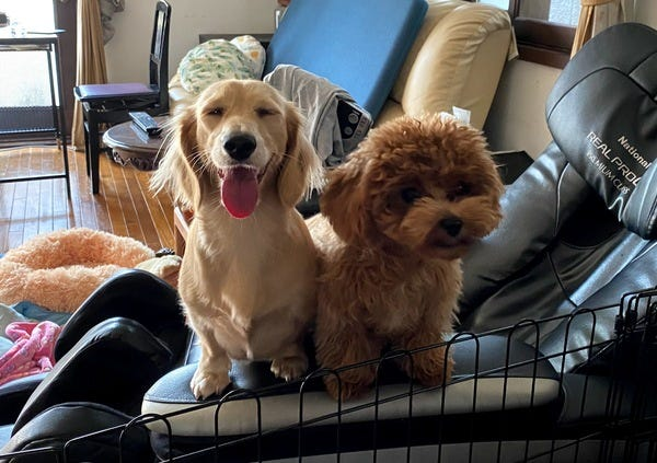 Our doggos :)