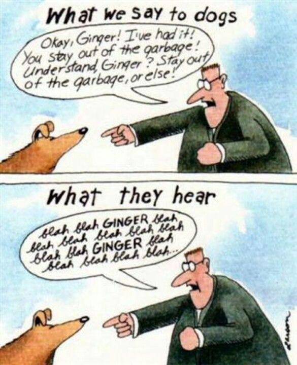 "Gary Larson-one of my all-time favorites! ""Blah, blah, Ginger"" | Far side  cartoons, Gary larson cartoons, The far side"