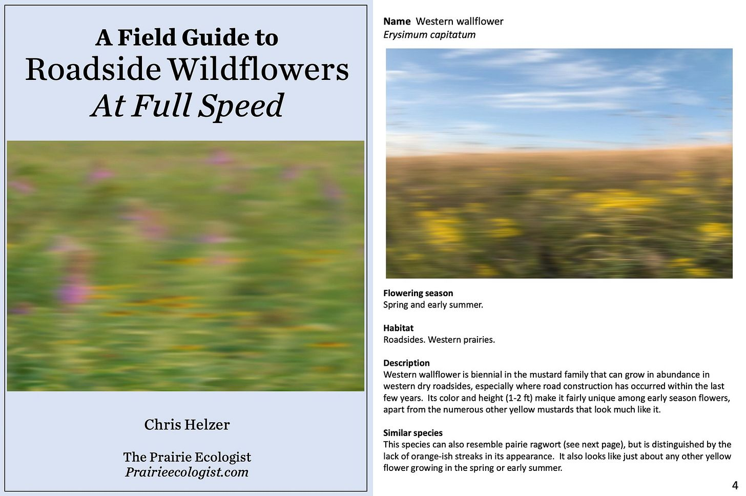 A Field Guide to RoadsideWildflowers At Full Speed