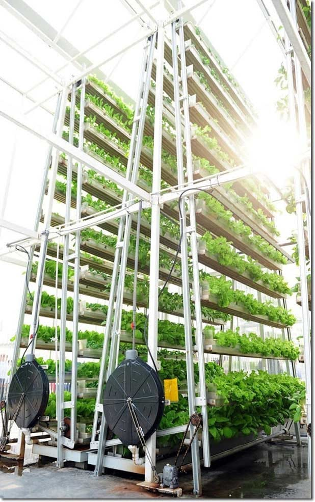 A-Go-Gro technology vertical hydroponics farm