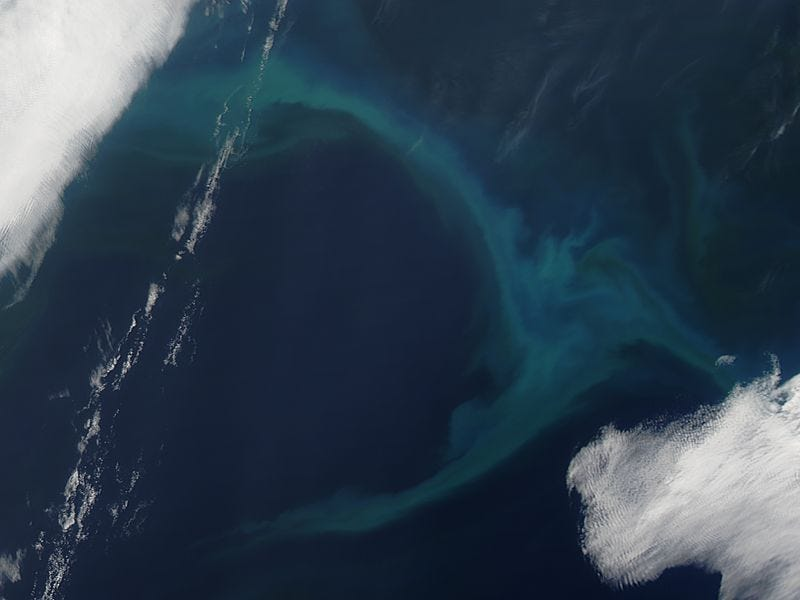 Phytoplankton bloom in the North Pacific Ocean