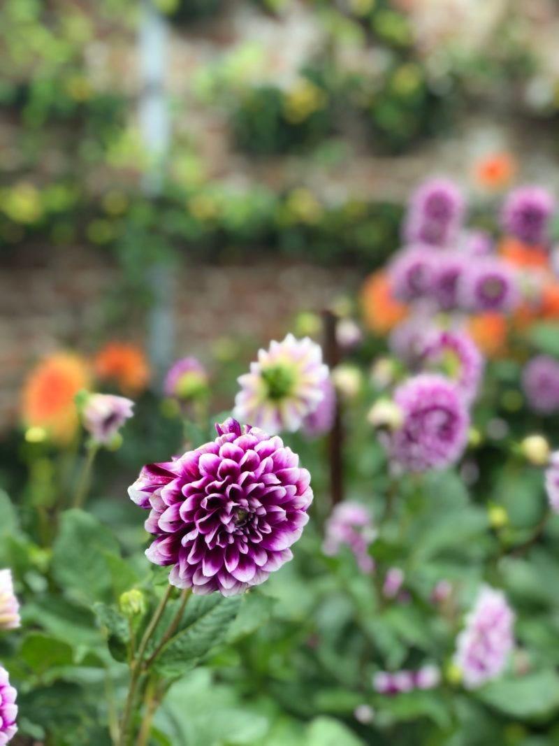 Wimpole gardens near Cambridge.
