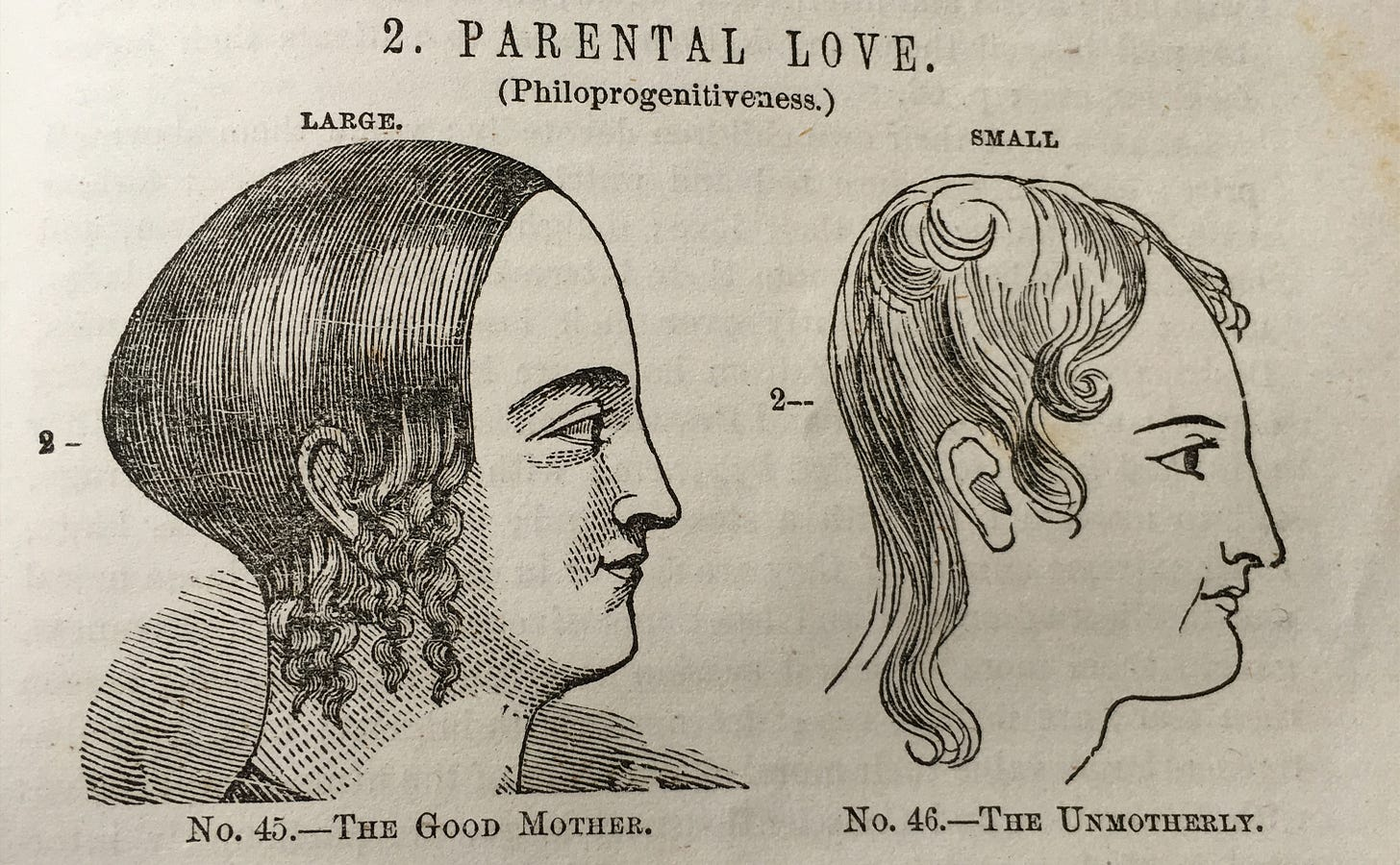 A phrenology diagram showing the heads of two women